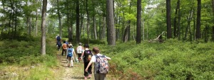 Kids hiking into woods with day packs on their backs